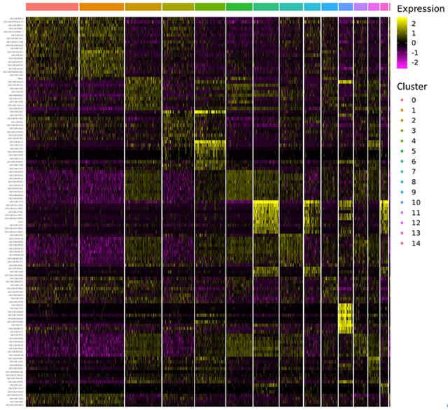 各クラスタの発現遺伝子(Heatmap)+ Cluster-specific genes