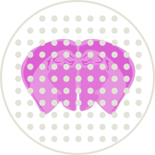 Visium 空間的遺伝子発現解析 <span style='color: red'>NEW</span>