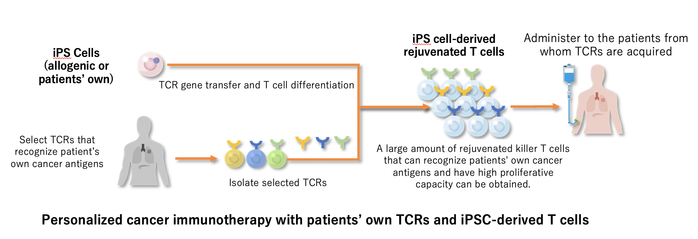 Personalized cancer immunotherapy with patients' own TCRs and iPSC-derived T cells