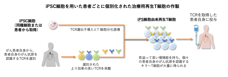 iPSC細胞を用いた患者ごとに個別化された治療用再生T細胞の作製